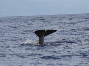 Wale satt