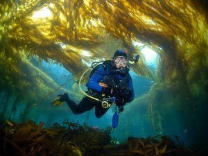 Im Kelp