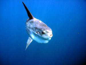 Sunfish Baja California